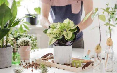 DIY Pot Plant